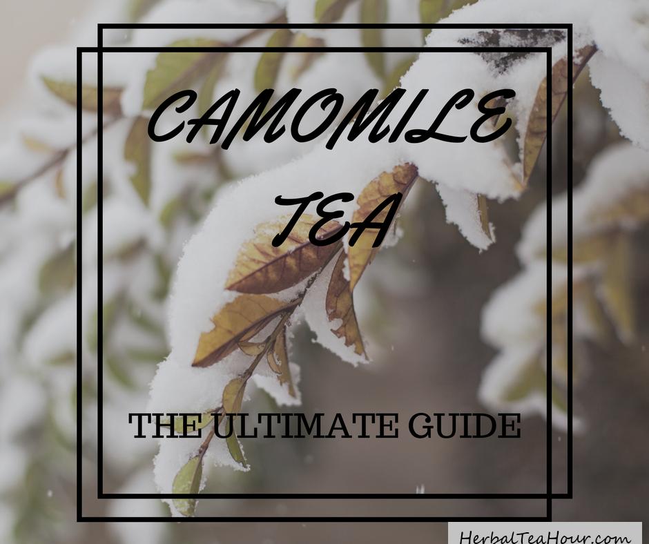 camomile tea guide