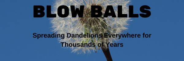 Dandelion tea information