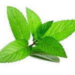herbal tea types peppermint