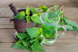 nettle leaf tea facts