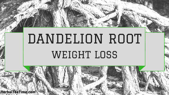 dandelion root weight loss