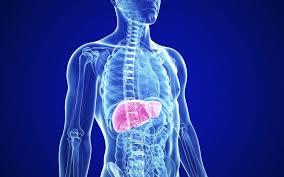 benefits hibiscus tea liver health