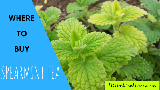 where to buy spearmint tea
