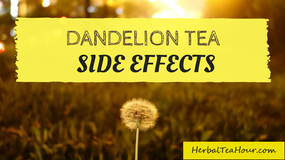 dandelion tea side effects