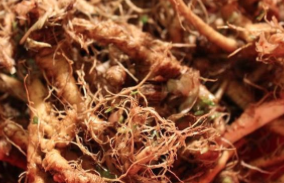 How to Make Dandelion Root Tea