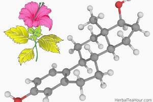 hibiscus tea hormones